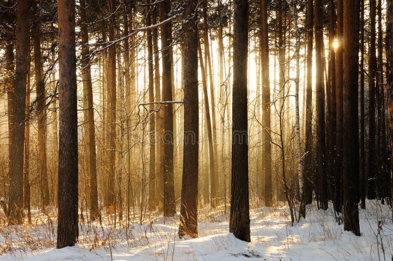 Luz a través de árboles foto de archivo