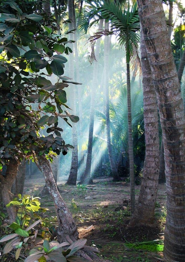 Luz a través de árboles fotografía de archivo libre de regalías