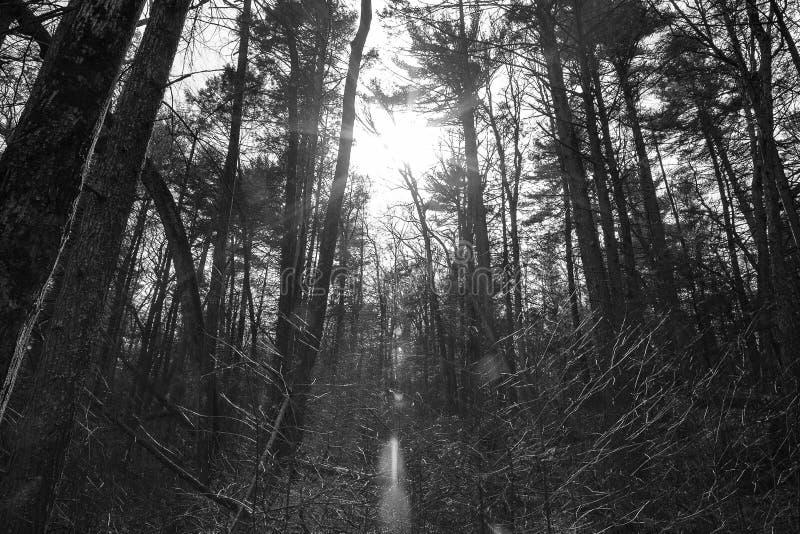 Luz a través de los árboles 2 foto de archivo libre de regalías