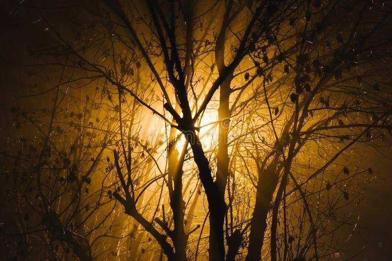 Luz a través de ramas desnudas imagen de archivo libre de regalías