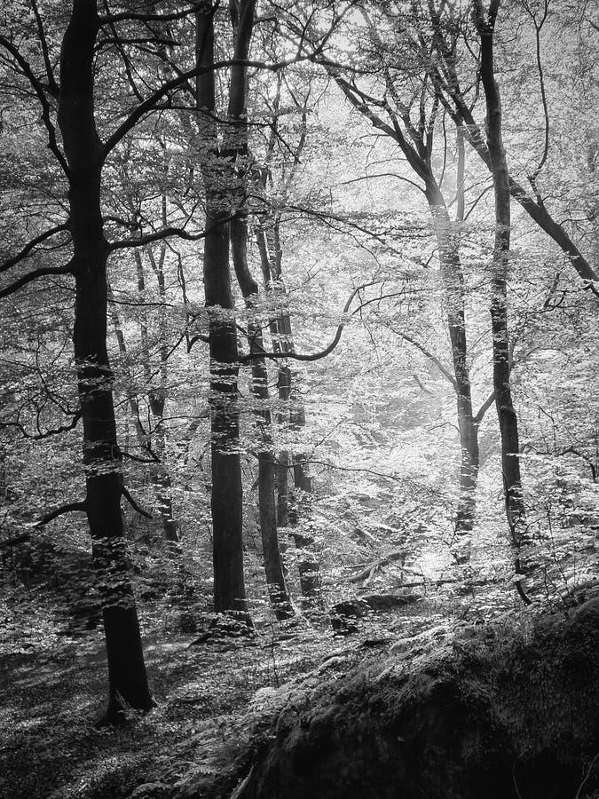 Luz a través del arbolado imagen de archivo