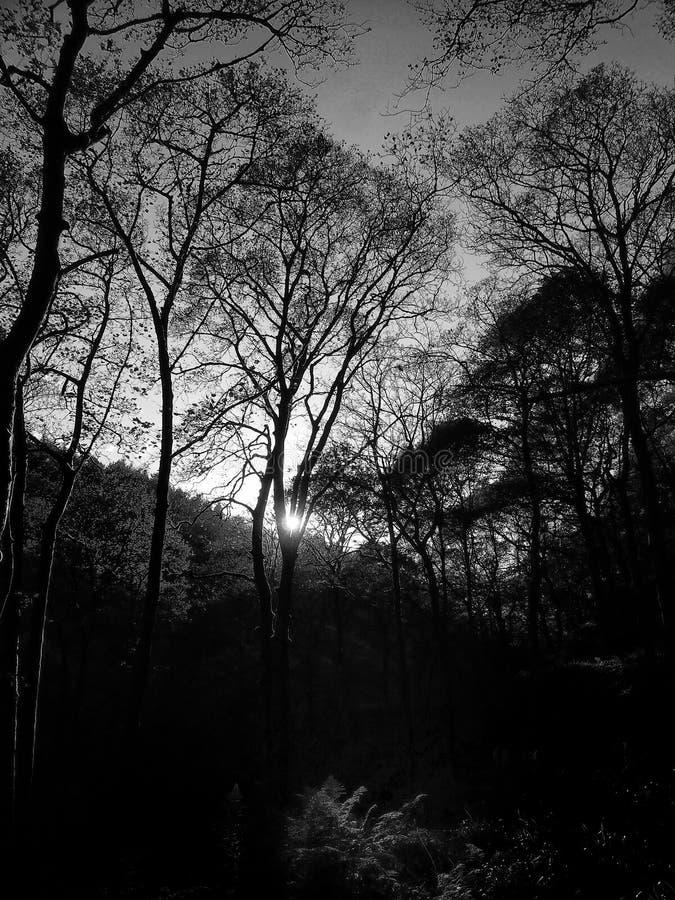 Luz a través del arbolado fotos de archivo libres de regalías