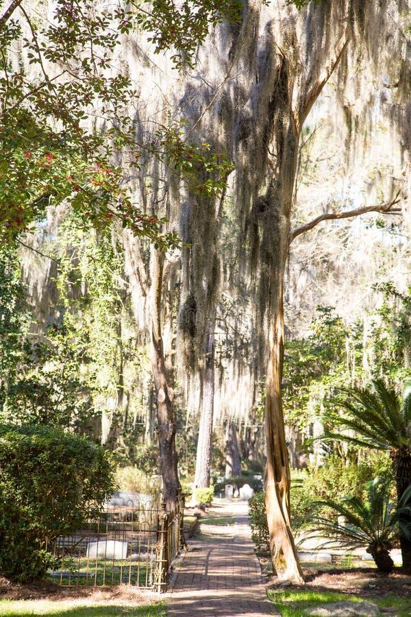Luz a través del español Moss Over Path foto de archivo libre de regalías