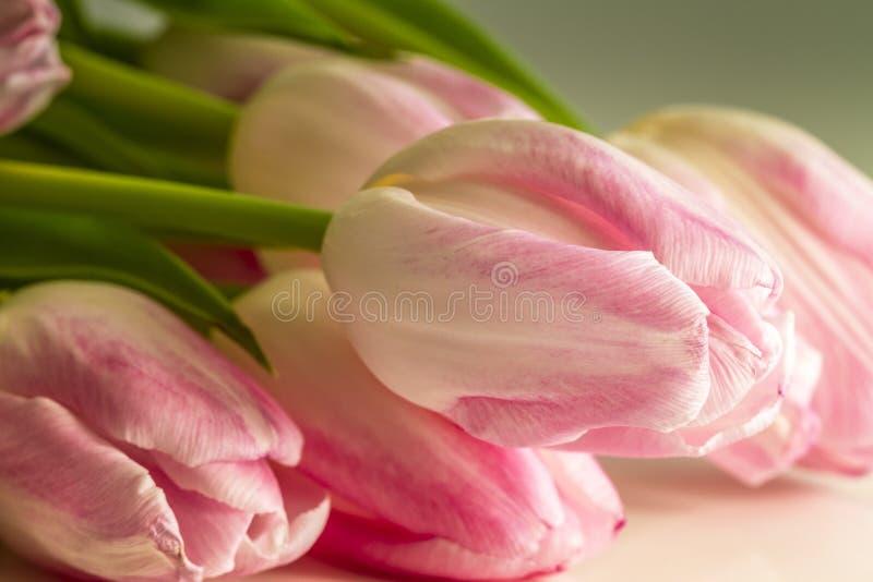Luz - tulipas cor-de-rosa na luz solar fotografia de stock