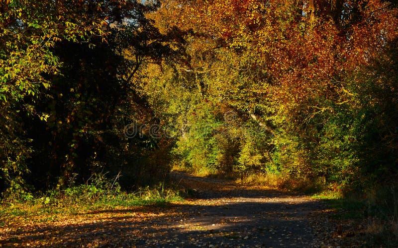 Luz y sombras en el camino entre los árboles imagenes de archivo