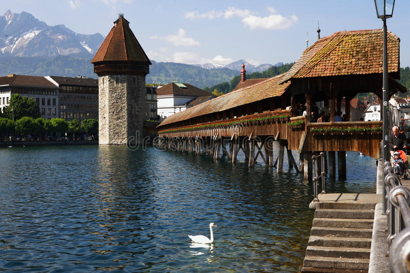 Luzern Schweiz wood bro och svan arkivfoto