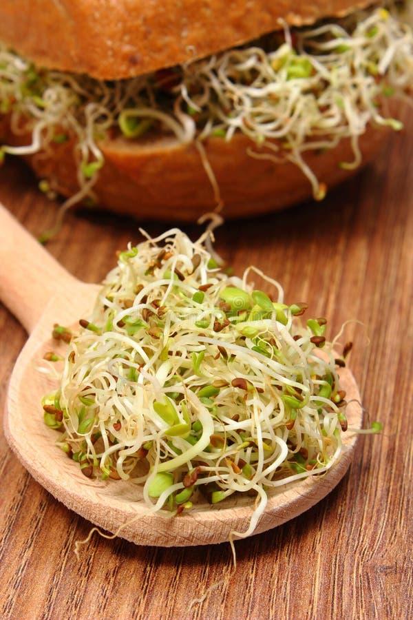 Luzerne en radijsspruiten op lepel en volkorenbroodbroodje stock afbeeldingen