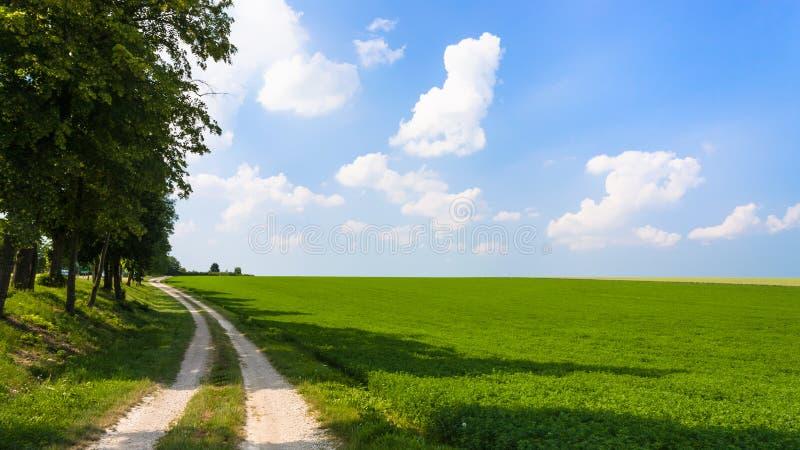 luzerne-gebied met landweg in Frankrijk stock afbeeldingen