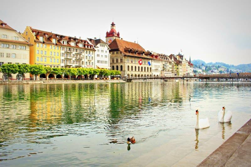 Luzerne-riviervogels Zwitserland royalty-vrije stock fotografie