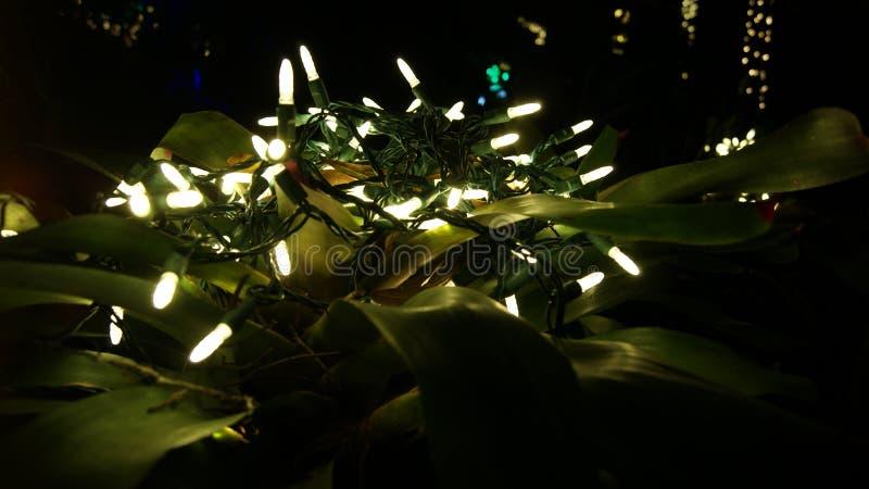 Luzes de incandescência do White Christmas, fim acima sobre uma planta tropical para decorações do jardim em um fundo preto escur fotos de stock