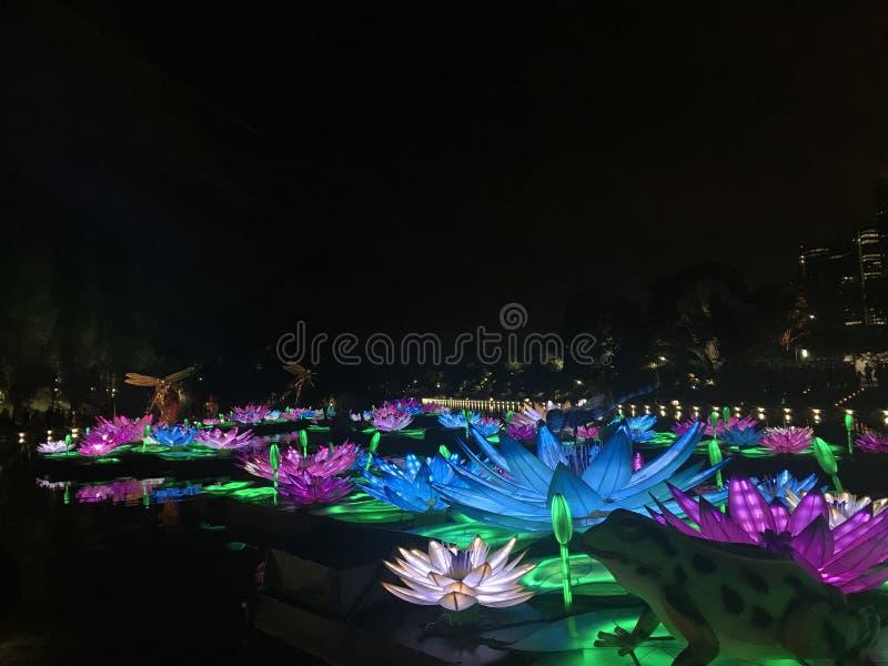 Luzes de Lotus fotografia de stock royalty free