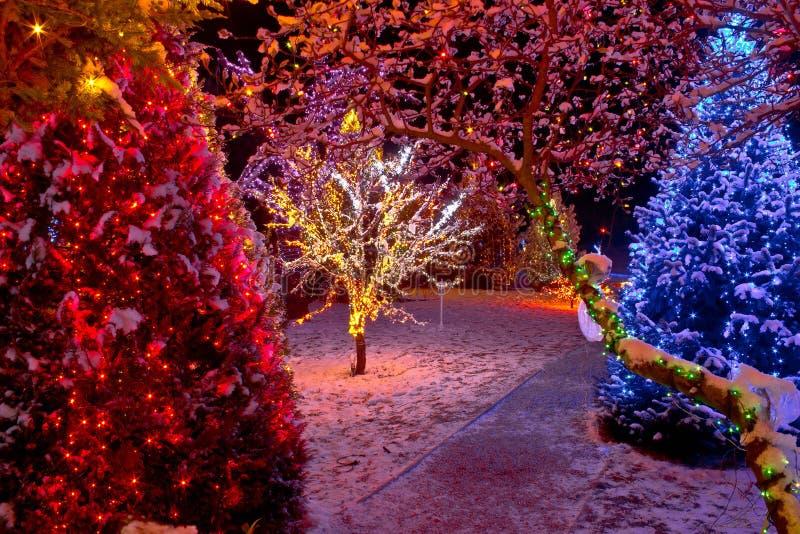 Luzes de Natal coloridas em árvores fotos de stock royalty free