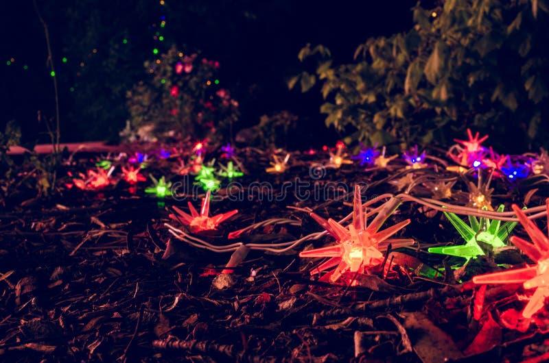 Luzes de Natal no jardim fotos de stock
