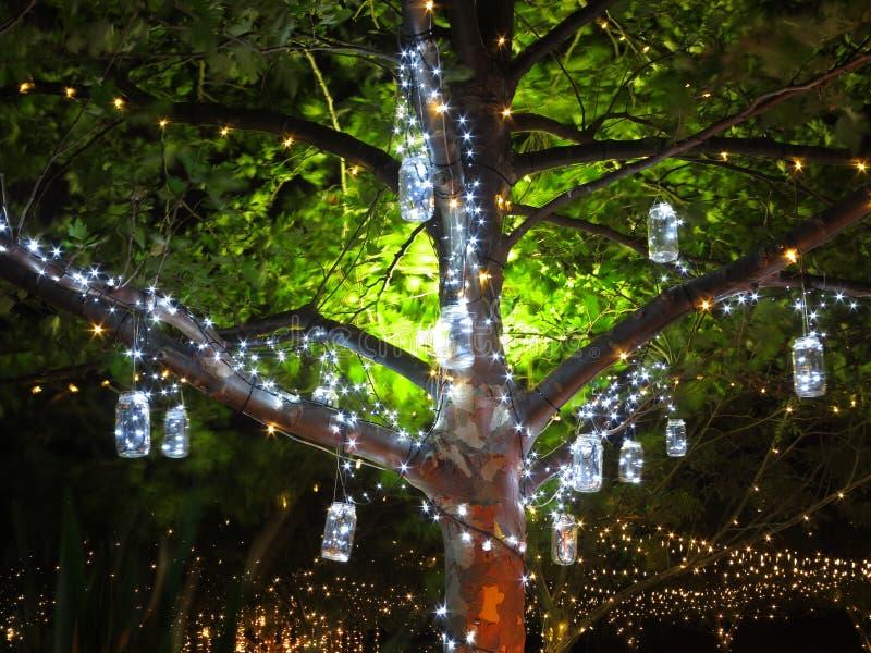 Luzes do feriado na árvore foto de stock