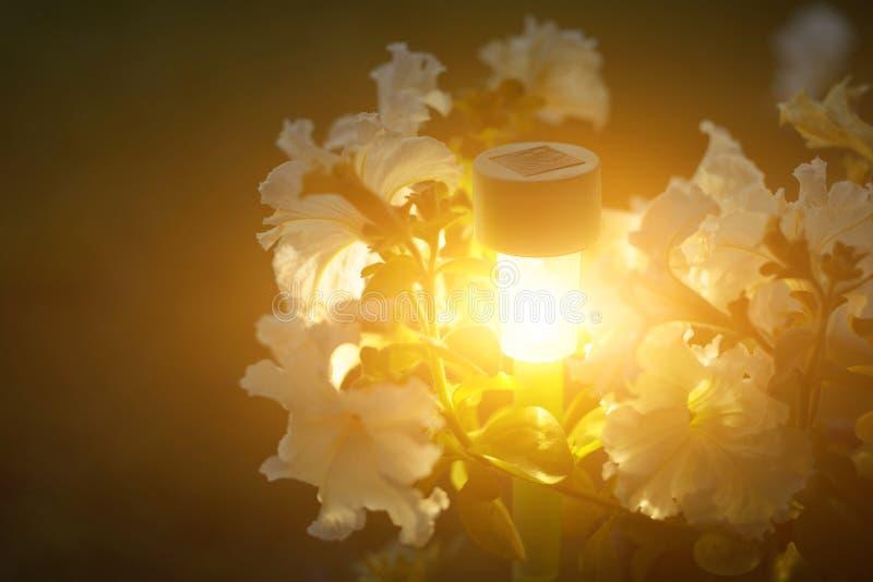 Luzes do jardim com bateria solar Tiro do close up imagens de stock