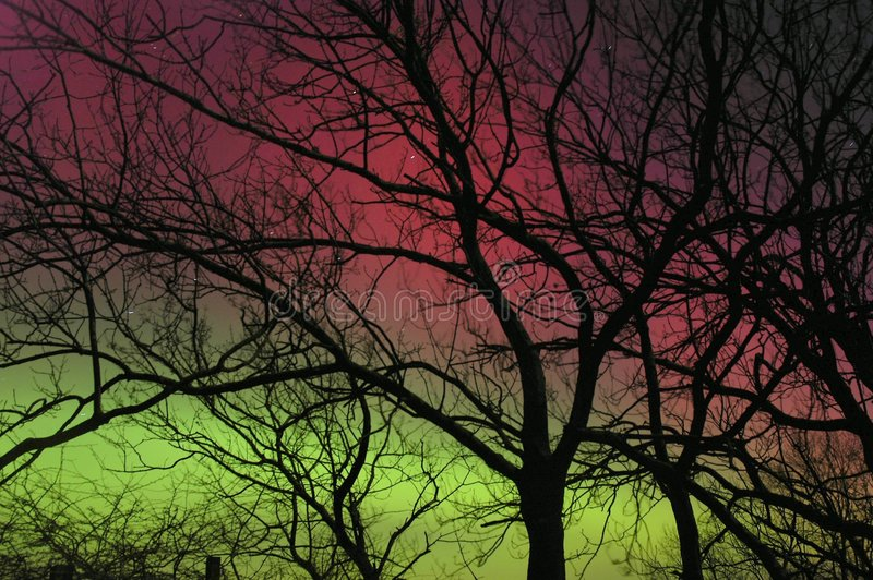 Luzes do norte atrás da silhueta da árvore imagem de stock