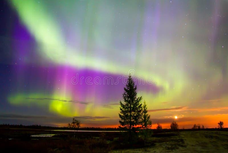 Luzes do norte (borealis da Aurora) foto de stock royalty free