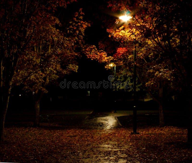 Luzes do parque com o trajeto molhado coberto nas folhas foto de stock