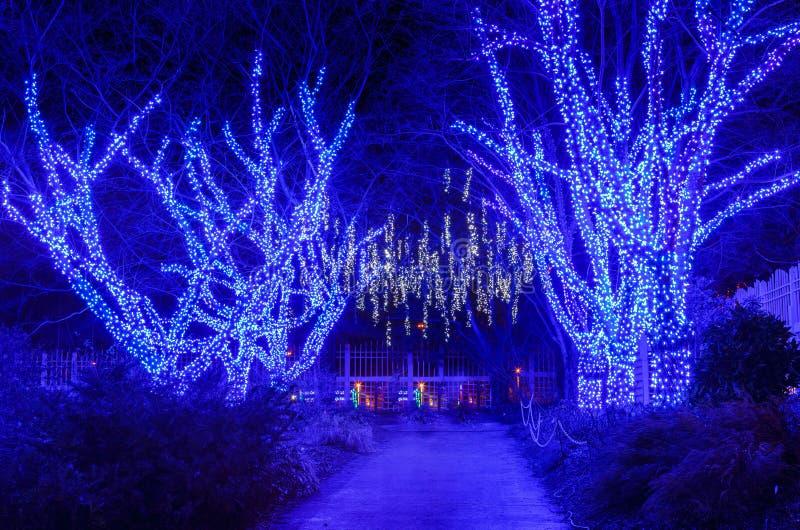 Download Luzes Exteriores Do Feriado Das árvores Imagem de Stock - Imagem de virgínia, lighting: 65580991