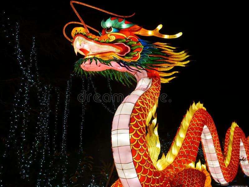 Luzes selvagens, dragão chinês em Dublin Zoo na noite imagens de stock