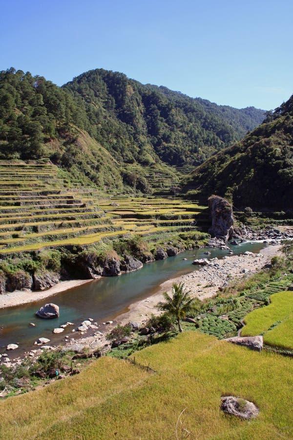 luzon nrthern philippines riceterrasser fotografering för bildbyråer