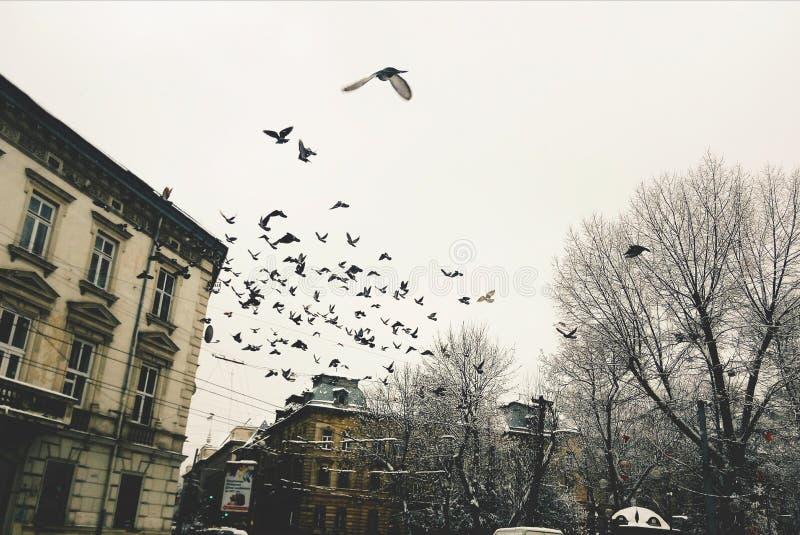 Lviv arkivfoton