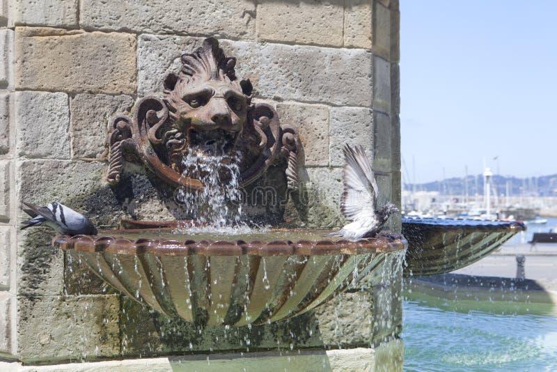 Lwów gołębie w Gijon i fontanna, Asturias region obrazy stock