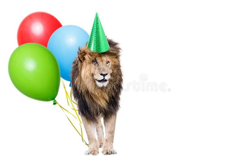 Lwa przyjęcie urodzinowe Z kopii przestrzenią obraz royalty free