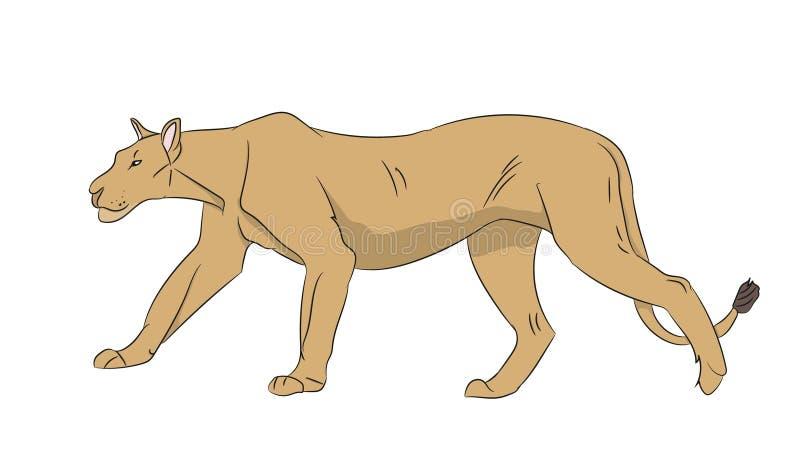 Lwica kolor, wektor ilustracji