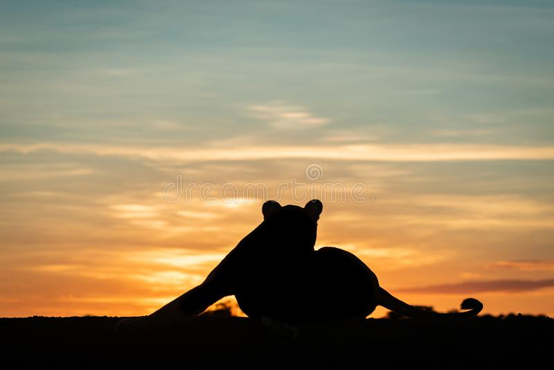 Lwicy kłamać sylwetkowy przy jutrzenkową rozciąganie nogą zdjęcie stock