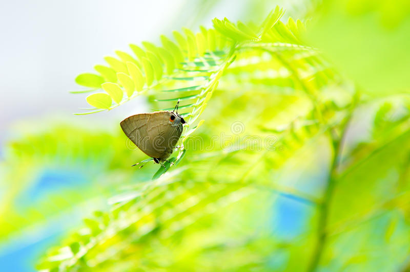 Lycaenidae on green leaf under sunlight royalty free stock images