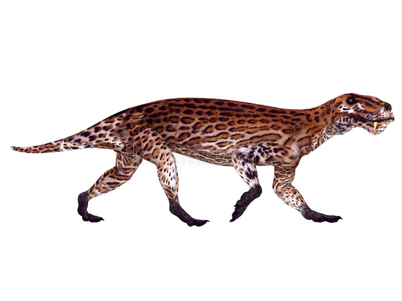 Lycaenops Permian Dinosaur. Lycaenops was a carnivorous mammal-like reptile that lived in South Africa during the Permian Period stock illustration