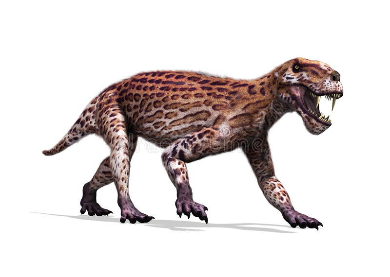 Lycaenops. The Lycaenops was a prehistoric therapsid (mammal-like reptile) that lived during the Permian period royalty free illustration