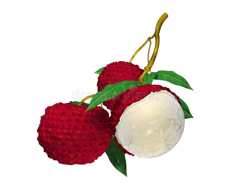 Lychee Frucht lizenzfreie abbildung