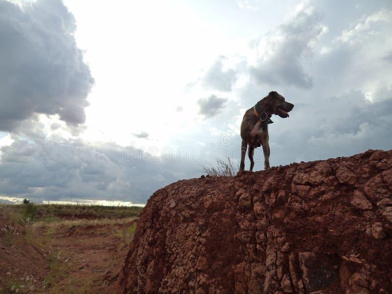 Lycklig ‹för †för hundsom går bland jordningen nära en vulkan arkivbild
