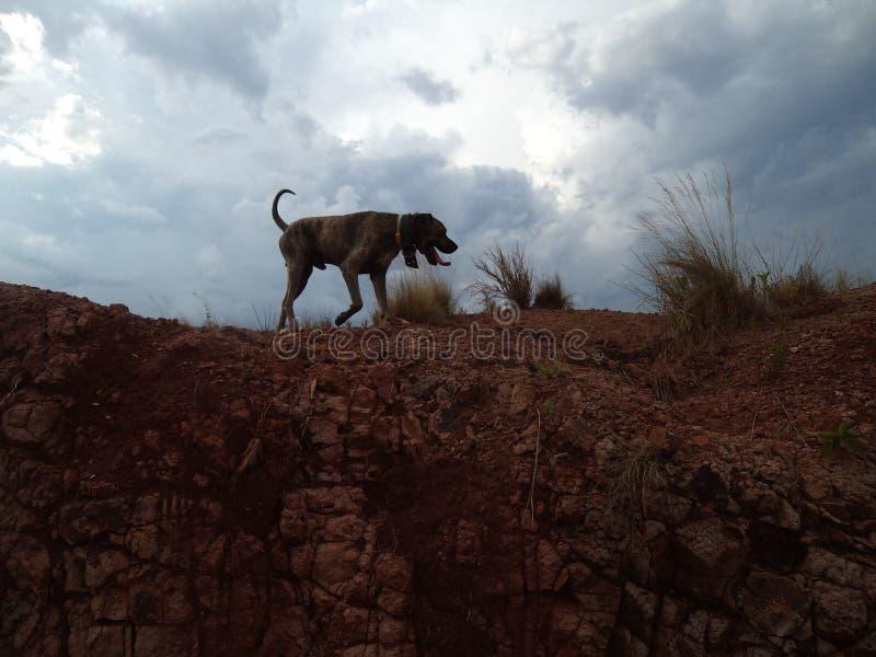 Lycklig ‹för †för hundsom går bland jordningen nära en vulkan royaltyfri foto
