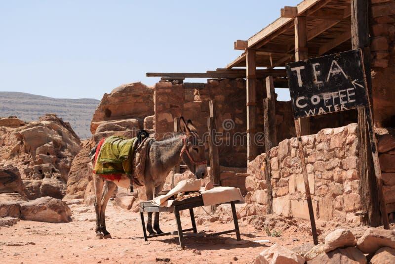 Lycklig åsna i Petra, Jordanien royaltyfria bilder