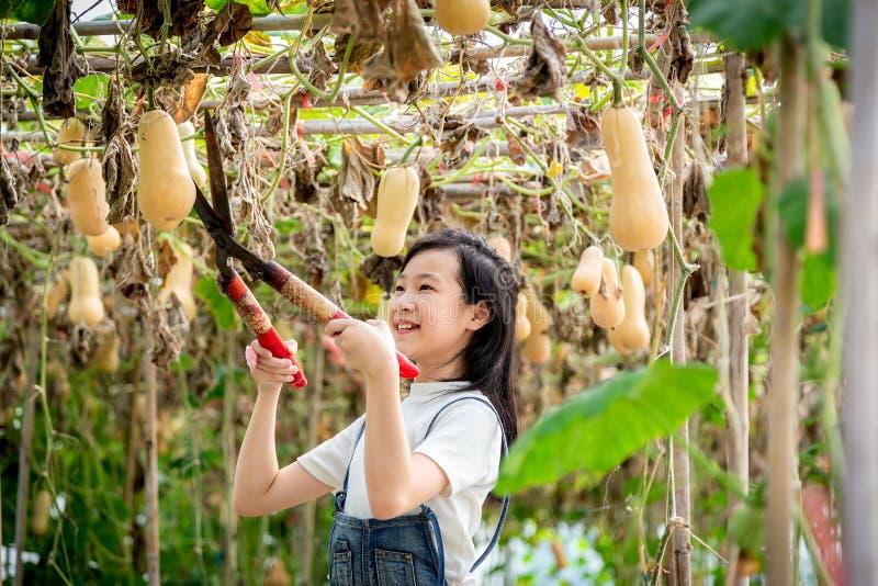Lycklig asiatisk flicka i hennes trädgård, liten flicka till att skörda pumpa royaltyfri bild
