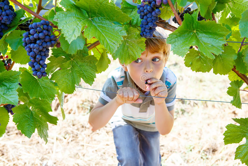 Lycklig blond ungepojke med mogna blåa druvor arkivbild