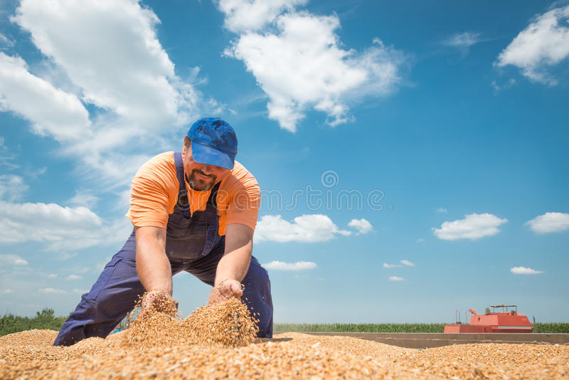 Lycklig bonde arkivfoto