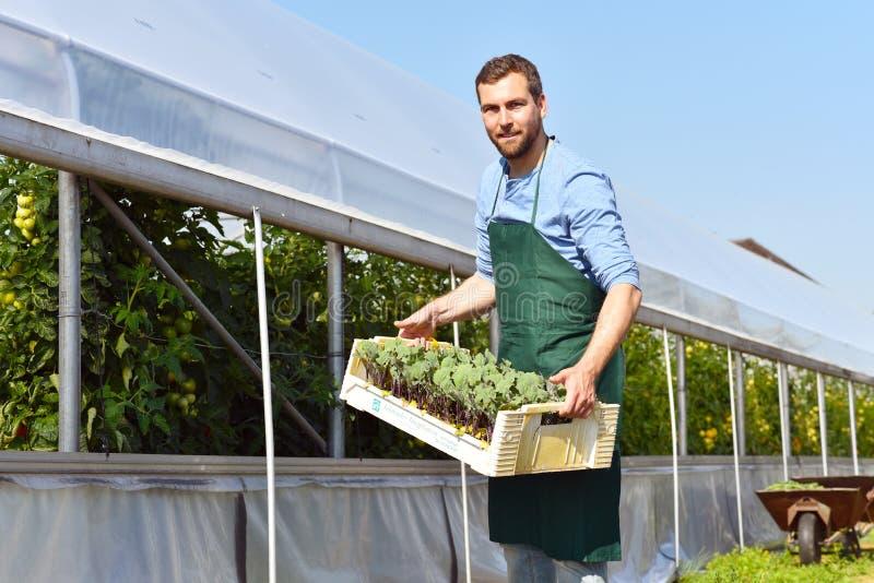 Lycklig bonde som växer och skördar grönsaker på lantgården royaltyfria foton