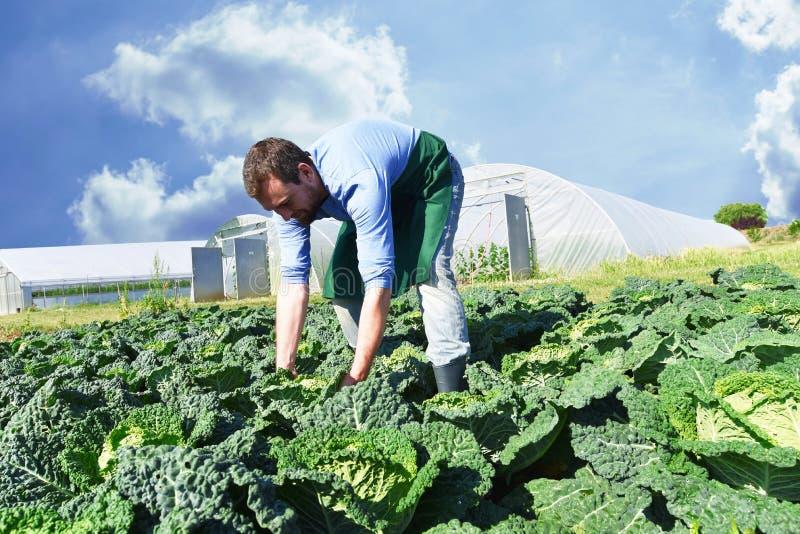 Lycklig bonde som växer och skördar grönsaker på lantgården arkivfoton
