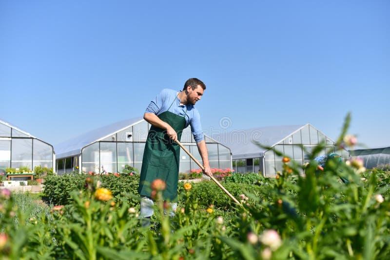 Lycklig bonde som växer och skördar grönsaker på lantgården arkivfoto