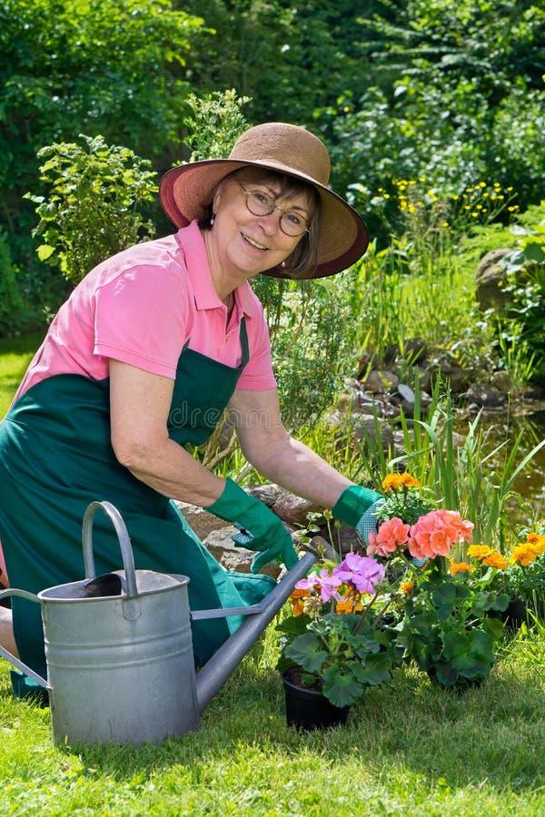 Lycklig dam som transplanterar vårblommor royaltyfri fotografi