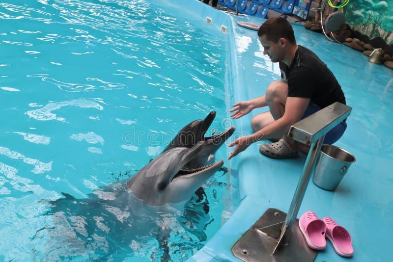 Lycklig delfinsolbadning arkivbild