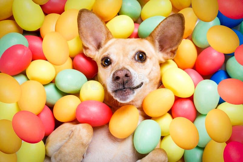 Lycklig easter hund med ägg royaltyfri foto