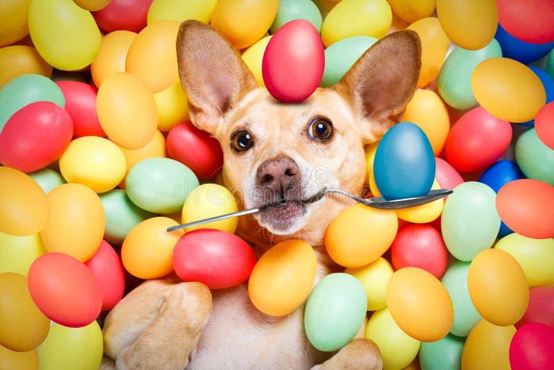 Lycklig easter hund med ägg arkivbilder