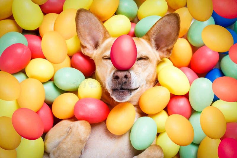 Lycklig easter hund med ägg royaltyfria foton