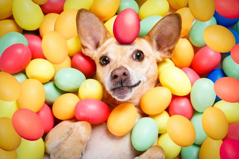 Lycklig easter hund med ägg arkivfoto