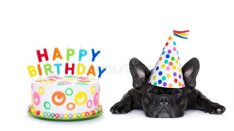Lycklig födelsedag som sover hunden royaltyfria bilder